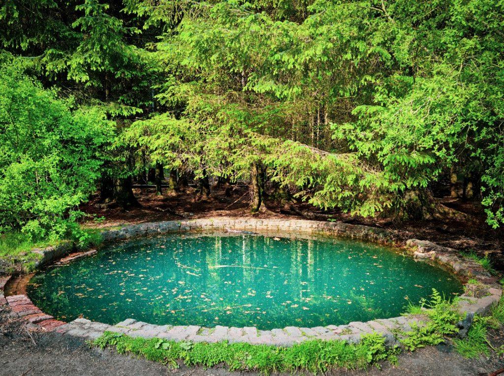 Comment décorer les bordures de votre bassin de jardin