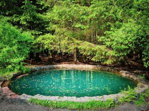 Read more about the article Comment décorer les bordures de votre bassin de jardin